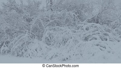 tree branches under the snow.