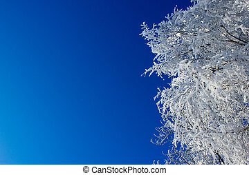Tree branches under the snow