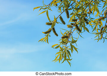 Tree branches with clear blue sky in background