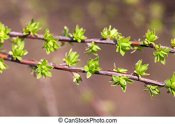 tree branches with green buds