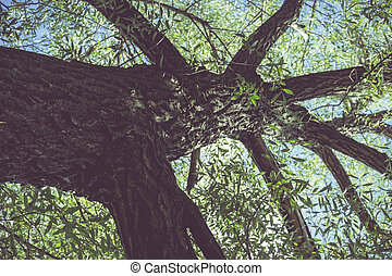 Tree Branches with Leaves