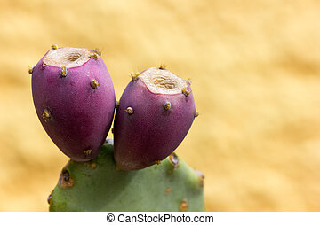 Tree branches with prickly pear