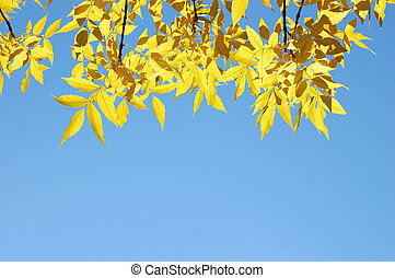 Tree branches with yellow autumn leaves on blue sky background
