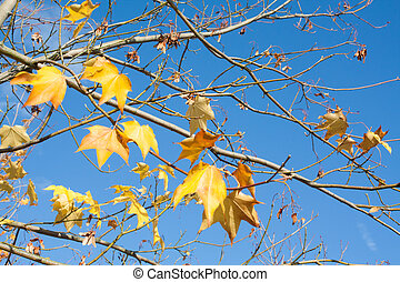 Tree branches with yellow autumn leaves
