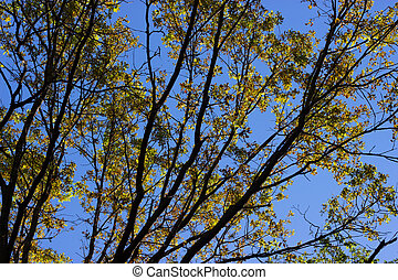 tree branches with yellow leaves