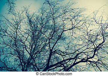 Tree Branches without Leaves Retro - Late autumn forest tree...