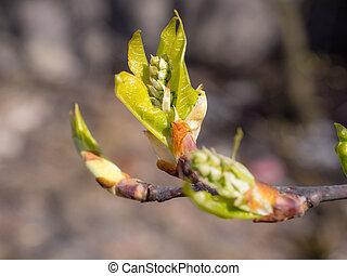 tree bud close up