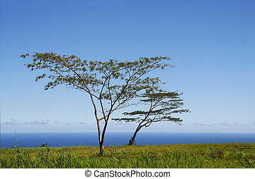 Tree by the ocean