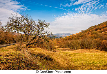 tree by the road in mountains in springtime - trees by the...
