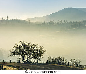 tree by the road on foggy sunrise in mountain