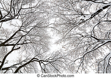 Tree canopy in a snow storm - Looking up at a tree conopy ...