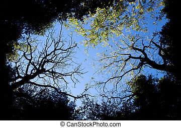 Tree canopy - Late summer afternoon light through with clear...