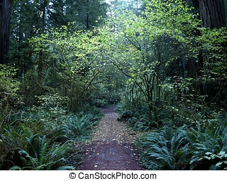 Tree Canopy over path in the forest