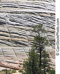 Checkerboard Mesa, in Zion National Park, displays its interesting cross-checking patterns with a tree in the foreground.