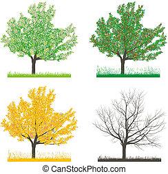 Tree cherry at four seasons