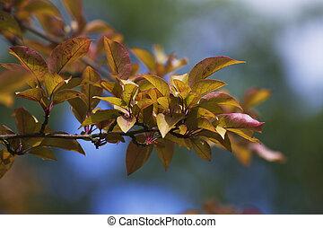 tree, cherry, branch