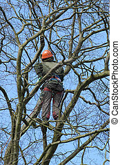 tree climber - brave climber inspecting for tree damage