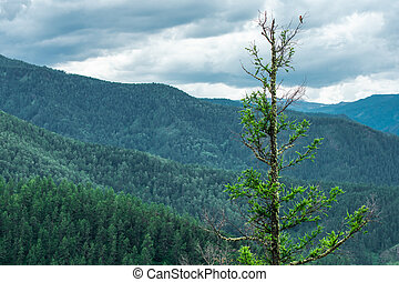 tree closeup on a background of mountains