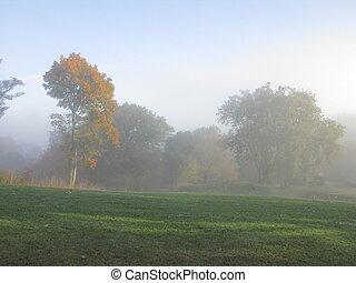 Tree, countryside, fog
