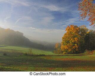 Tree, Countryside, sunray, sunlight, fog