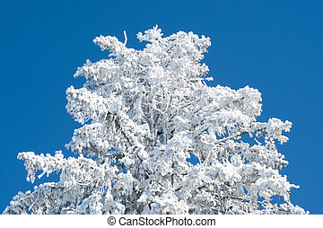 Tree Covered by Snow