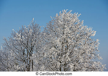 Tree covered by snow on blue clear sky