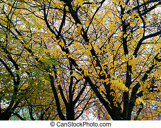 tree crest at fall