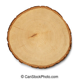 Tree Cross Section - Tree Rings Cross Section and Texture...