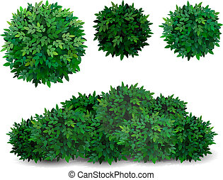 tree crown foliage bush - Vector bush in different forms. ...