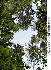 Tree crown frame