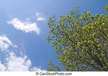 tree crown on blue sky