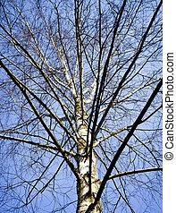 tree-crown, uden, blade, -, bare træ, branches