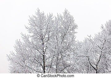 tree crowns in winter