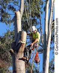 Tree Cutter - Man up in tree with chainsaw