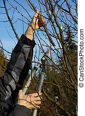 tree cutting 17
