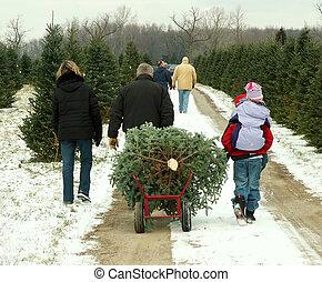 tree cutting family
