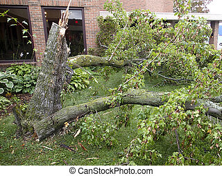 Tree damage from a thunder storm