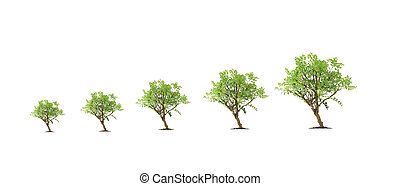 Evolution of a tree at various stages of growth