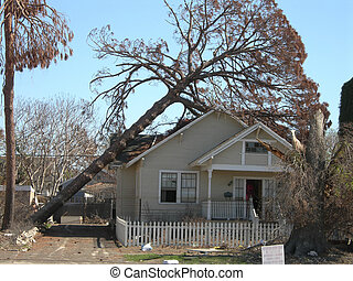 fallen pine tree rests on New Orleans home after Hurricane Katrina