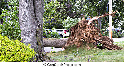 Tree falls across road and takes the electic and cable wires down with it