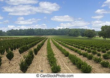 tree farm in rural area