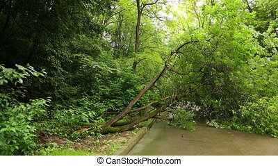Tree fell down city park summer asphalt path, branches ...