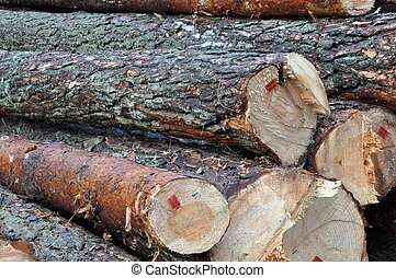 Tree felled in the forest