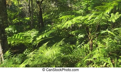 Tree Ferns and Dense Vegetation in Thai Tropical Rainforest...