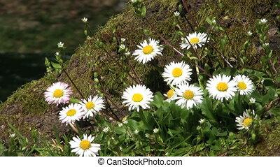 Tree Flowers Close Up