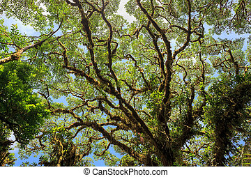 Tree foliage in rainforest