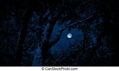 Tree Framing Full Moon In Night Sky - Full moon seen through...