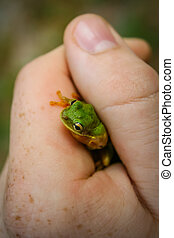 Tree Frog in Hand