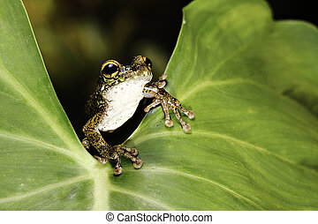 tree frog leaf tropical rain forest