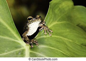 tree frog leaf tropical rain forest